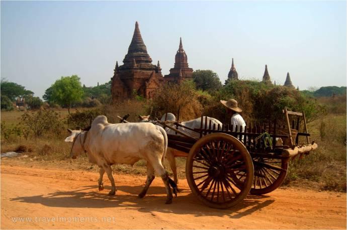 Bagan, horse carts, myanmar